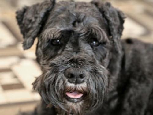 Sad Dogs: Meet Oscar