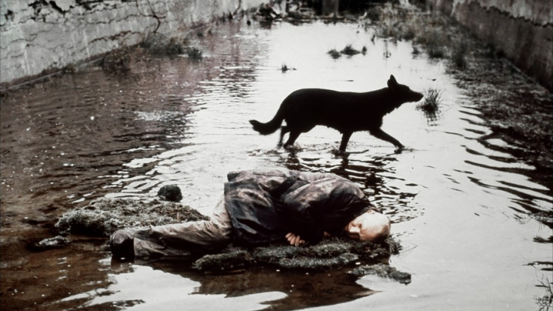 Andrei Tarkovsky Season