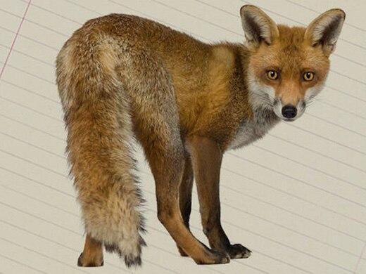 The Fox File