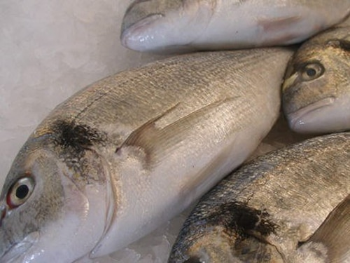 Lilly Tilapia Fillet (500g)   Compare Prices, Buy Online ...