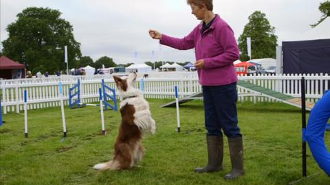 Supervet in the Field - Agility Course
