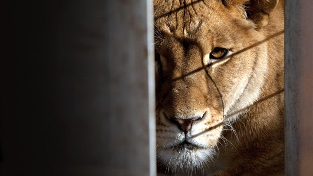 America's Animal Hoarder: Horror at the Zoo