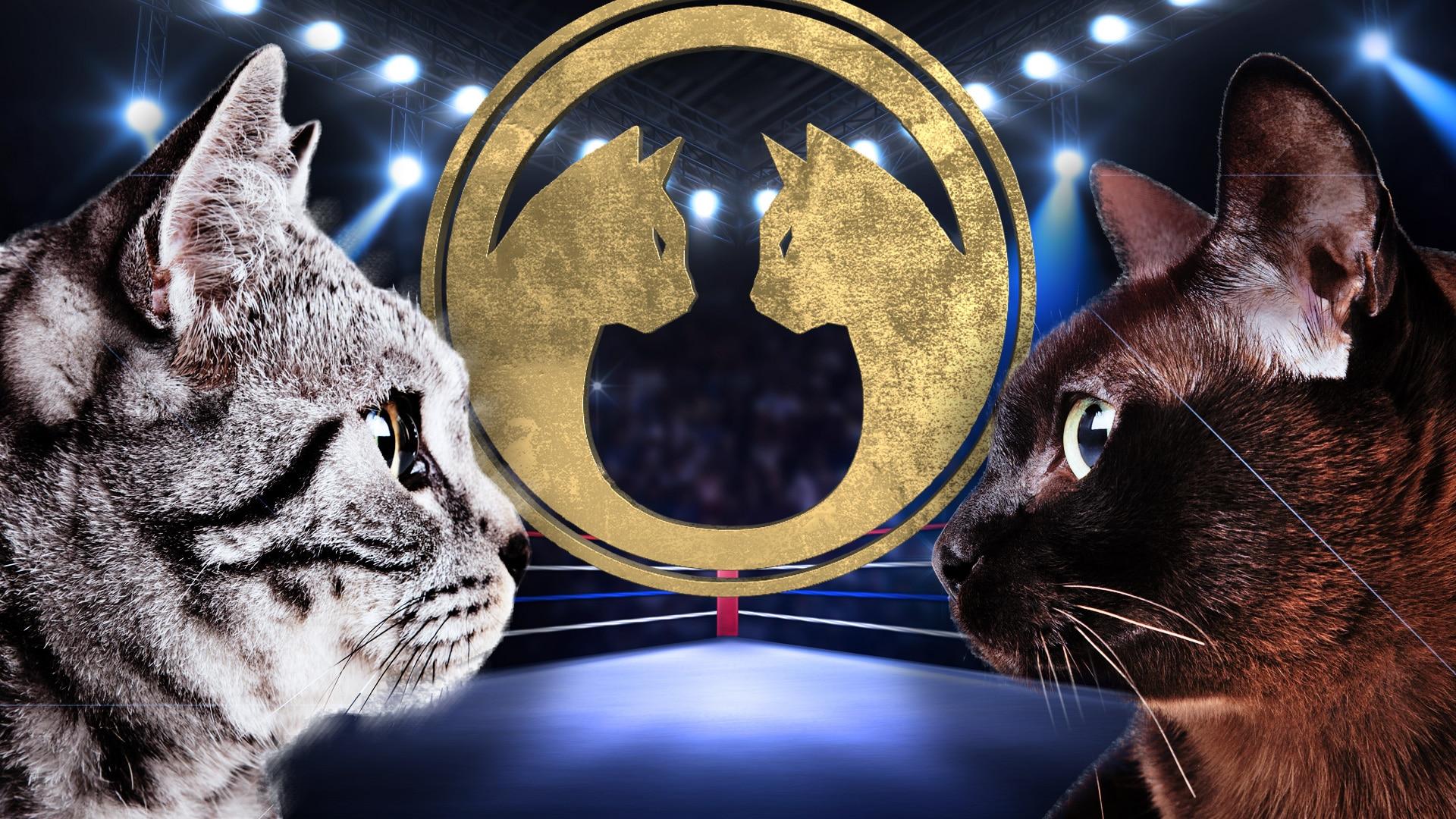 Battlecats