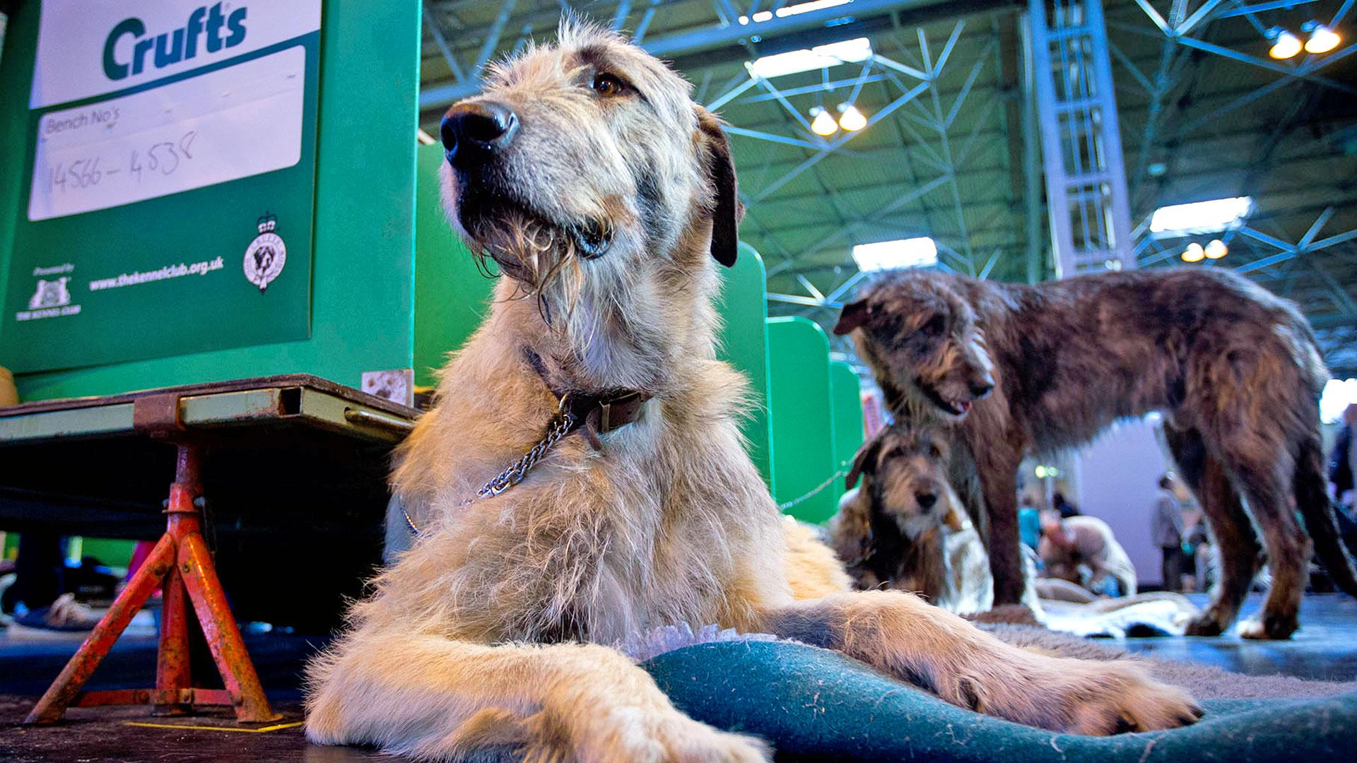 2017 Day 2 - Canine Health & Welfare