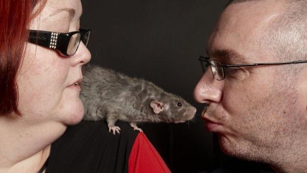 Head Over Heels in Rats