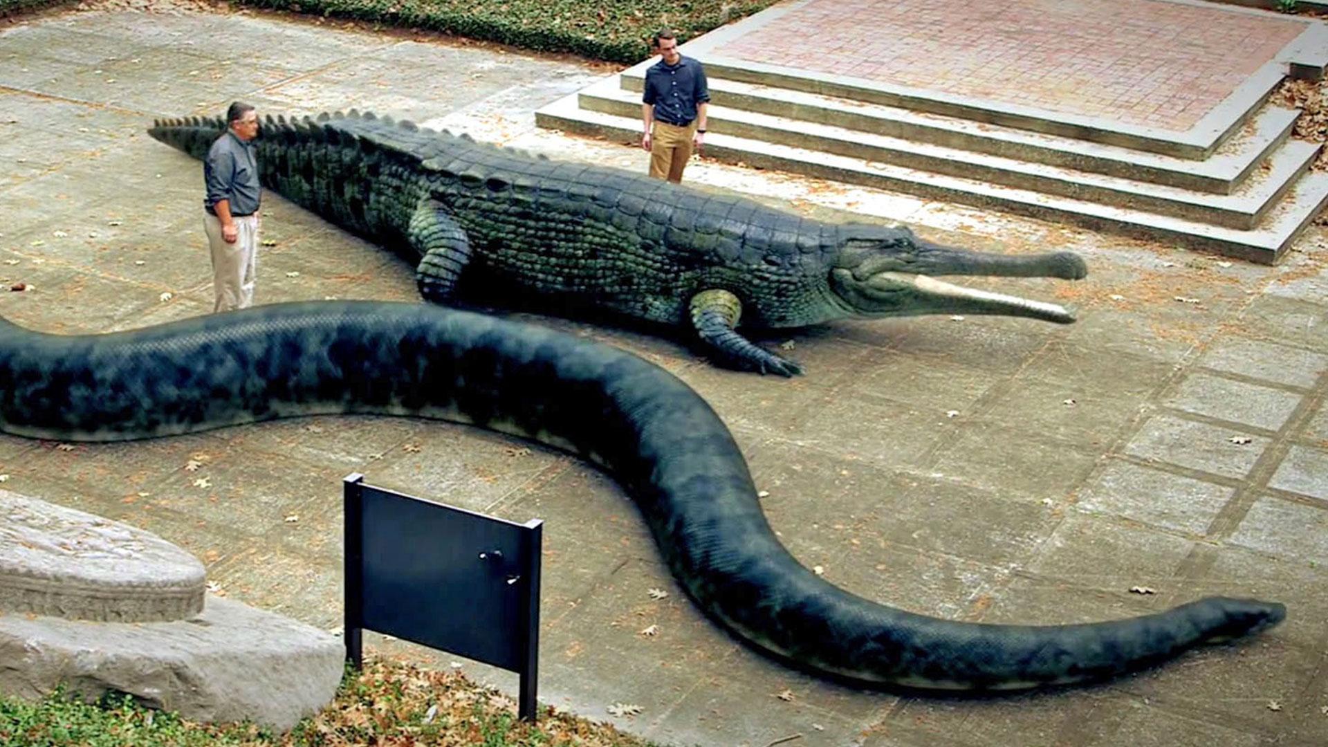 prehistoric giant crocodile wwwpixsharkcom images