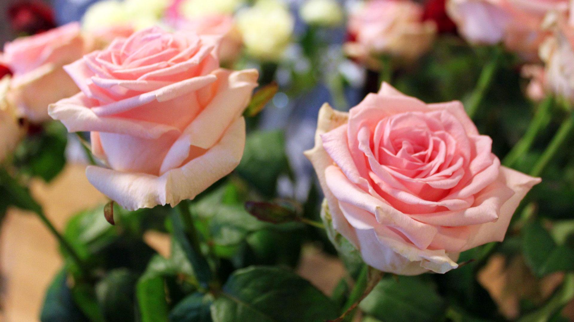 The Billion Pound Flower Market