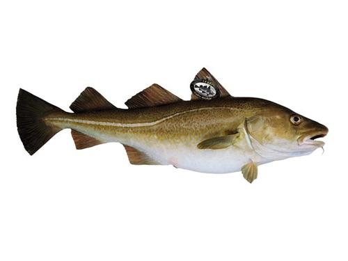 Sustainable Seafood, the Norwegian Way