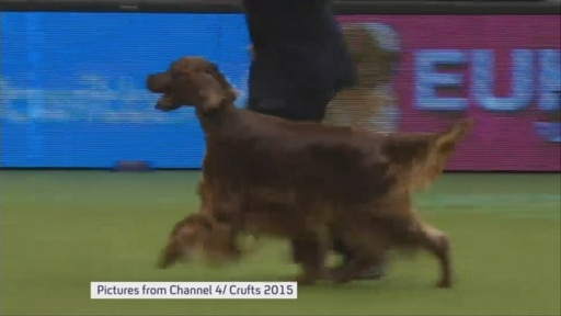 Crufts dog poisoning: the mystery deepens