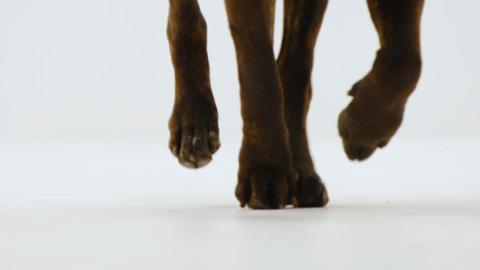 S2-Ep1: Left Paw or Right Paw