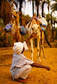 A photo of Ahmad stroking the camel Speke - Walking the Nile