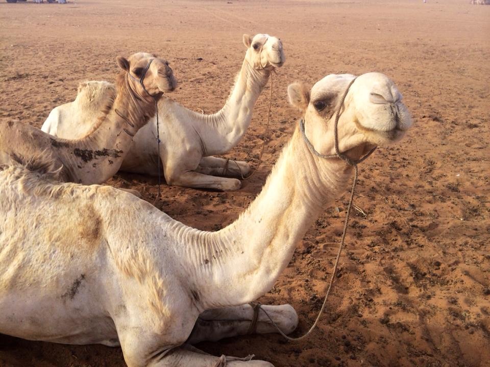 Day 158 - Sudan: Sandstorms & Camels