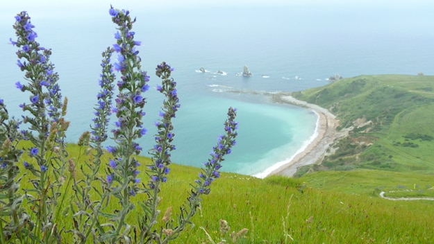 View from Lulworth Firing Range