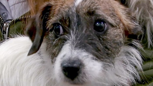 The Supervet: Noel Fitzpatrick - Series 13 Episode 3