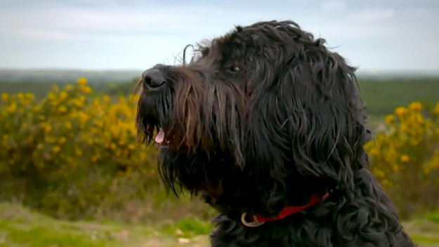The Supervet: Noel Fitzpatrick - Series 13 Episode 6