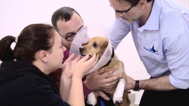 The Supervet - Series 5 Episode 1