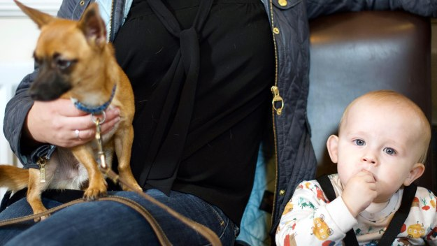 Train Your Baby Like A Dog - Train Your Baby Like A Dog