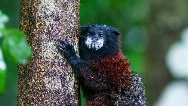 Wild Amazon - Jungle Mates