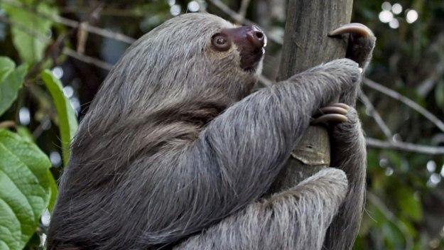 Wild Amazon - A Life Among Trees