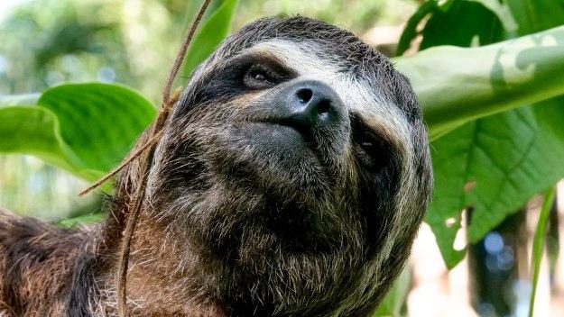 Wild Amazon - Jungle Juniors